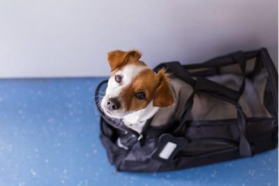 tips for moving with a pet